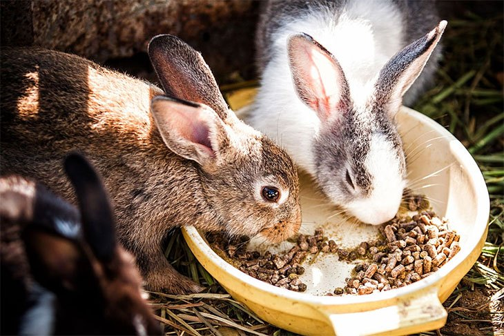 will rabbits eat dog food