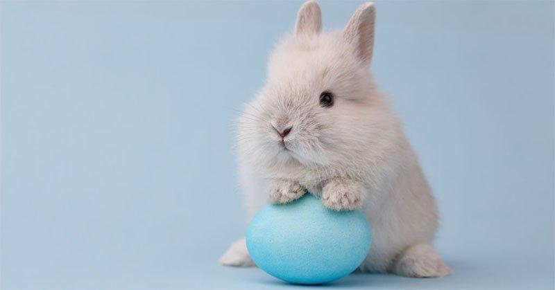 can rabbits eat dog food