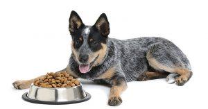 best dog food for blue heelers